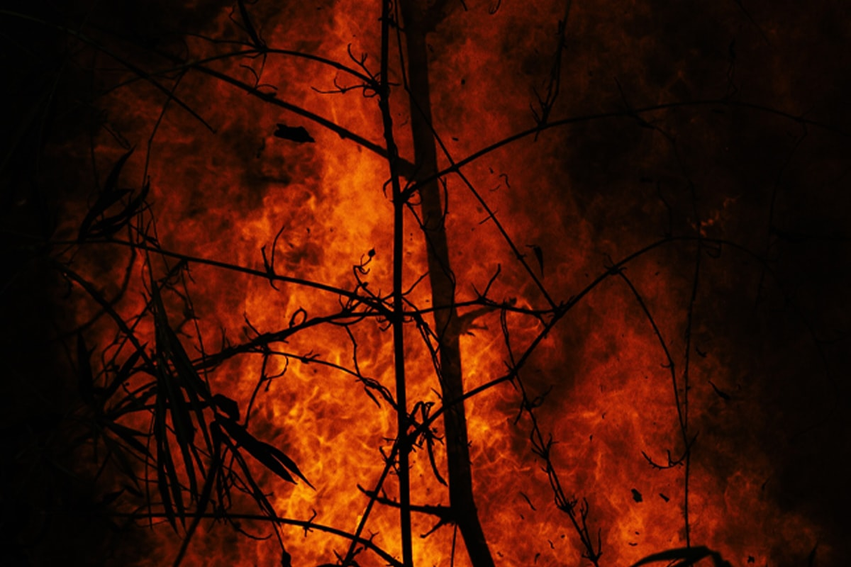 A dramatic, red and orange fire, with small burnt trees in the foreground.