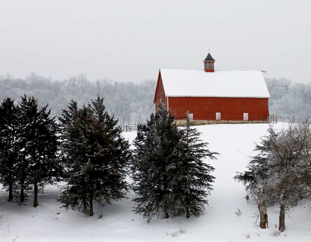 A painting of a winter scene with a red barn on a snowy hill and pine trees in the foreground.